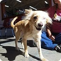 Adopt A Pet :: Vera - Seattle, WA