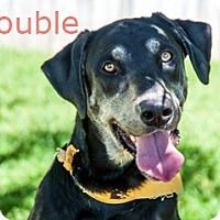 Hound (Unknown Type) Mix Dog for adoption in Hamilton, Montana - Trouble