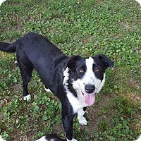 Adopt A Pet :: Bo Bo - Winchester, KY