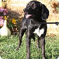 Adopt A Pet :: Jewels (New Photos) - Marietta, OH