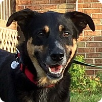 German Shepherd Dog/Retriever (Unknown Type) Mix Dog for adoption in Virginia Beach, Virginia - Chiko