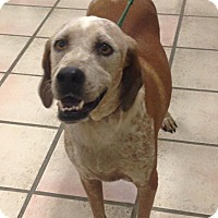 Adopt A Pet :: Sandy - Newburgh, IN