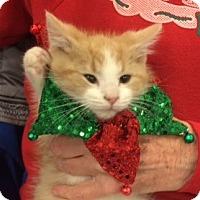 Adopt A Pet :: Rodney Goldenrod - Wilmore, KY