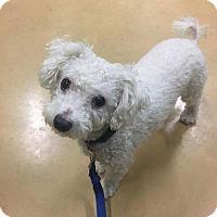 Adopt A Pet :: Sammy - Princeton, MN