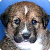 Adopt A Pet :: NUTMEG(OUR
