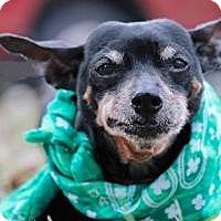 Adopt A Pet :: Mr. Magoo - New Smyrna Beach, FL