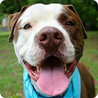 Adopt A Pet :: Lexx - Austin, TX