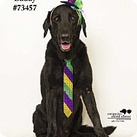 Adopt A Pet :: Buddy - Baton Rouge, LA
