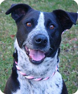 Border Collie Mix Dog for adoption in Red Bluff, California - Millie