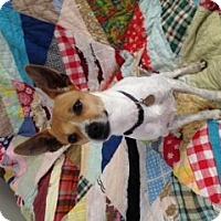Adopt A Pet :: Brenin - Homewood, AL