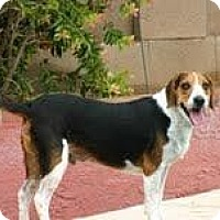 Adopt A Pet :: Tucker Brown - Phoenix, AZ