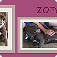 Adopt A Pet :: ZOEY - Dallas, NC