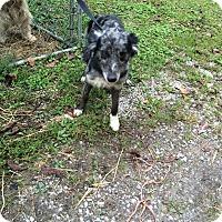 Adopt A Pet :: Anna Belle - Hazard, KY