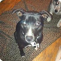Adopt A Pet :: jasmine - Ortonville, MI