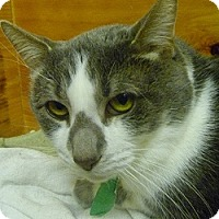 Adopt A Pet :: Eddie - Hamburg, NY