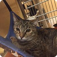 Adopt A Pet :: Ella - Monroe, GA