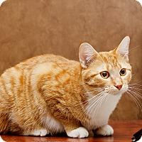 Adopt A Pet :: Luke - Roseville, MN