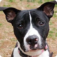Adopt A Pet :: Colbie Caillet - Atlanta, GA