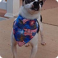 Adopt A Pet :: Bandit - Wilmington, MA