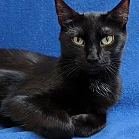 Adopt A Pet :: Hadley - St Louis, MO