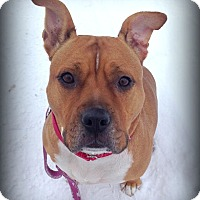 Adopt A Pet :: ROXY - Carpenteria, CA