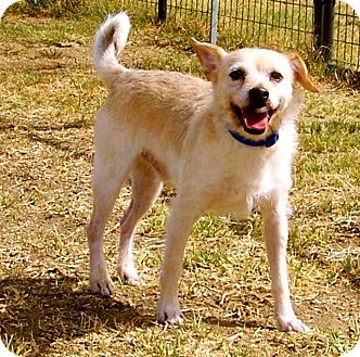 Terrier (Unknown Type, Medium) Mix Dog for adoption in Weimar, California - Indy