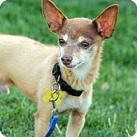 Adopt A Pet :: Dude - Salt Lake City, UT