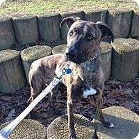 Adopt A Pet :: Cali - oxford, NJ
