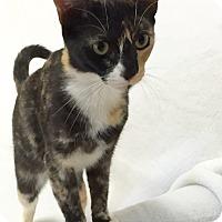 Adopt A Pet :: Ellen - Mission Viejo, CA