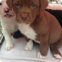 Adopt A Pet :: Hazel - Daleville, AL