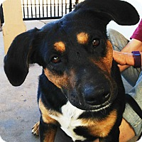 Adopt A Pet :: Tilly - Poway, CA