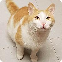 Adopt A Pet :: BUFF BOB - Tiffin, OH