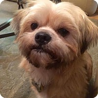 Adopt A Pet :: John Carroll Lynch - Euless, TX