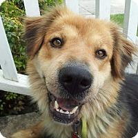 Adopt A Pet :: Sara - Portland, ME