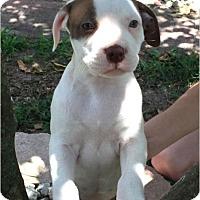 Adopt A Pet :: Freckles - Windermere, FL