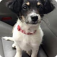 Adopt A Pet :: Dortie - Sacramento, CA
