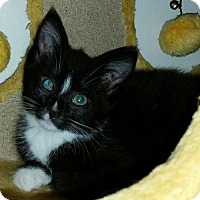 Adopt A Pet :: Merryweather - Whitewater, WI