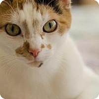 Adopt A Pet :: Zoey - Worcester, MA