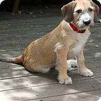 Adopt A Pet :: Clark - Mt. Prospect, IL