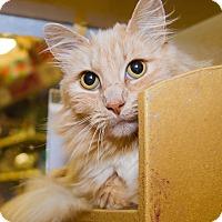 Adopt A Pet :: Maripoo - Irvine, CA
