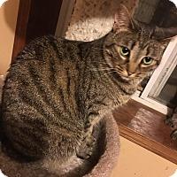 Adopt A Pet :: Cricket - Wichita, KS