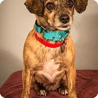 Adopt A Pet :: Queenie - Berkeley Heights, NJ