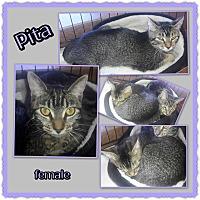 Adopt A Pet :: Pita - Richmond, CA