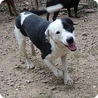 Adopt A Pet :: Fenway - House Springs, MO