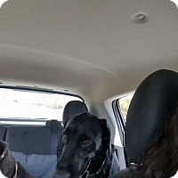 Labrador Retriever Mix Dog for adoption in Austin, Texas - Carsen