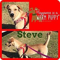 Adopt A Pet :: Steve - Snyder, TX