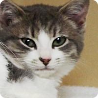 Adopt A Pet :: Kiev - Lincolnton, NC