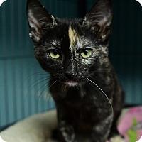 Adopt A Pet :: Flora - Tomball, TX