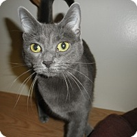 Adopt A Pet :: Jacinda - Milwaukee, WI