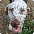 Adopt A Pet :: Zeus #2